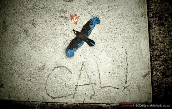 """Cali"", Christer Hedberg | christerhedberg.se"
