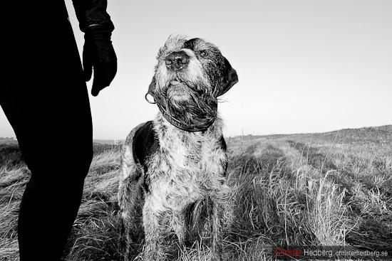 Hunden. Foto: Christer Hedberg | christerhedberg.se