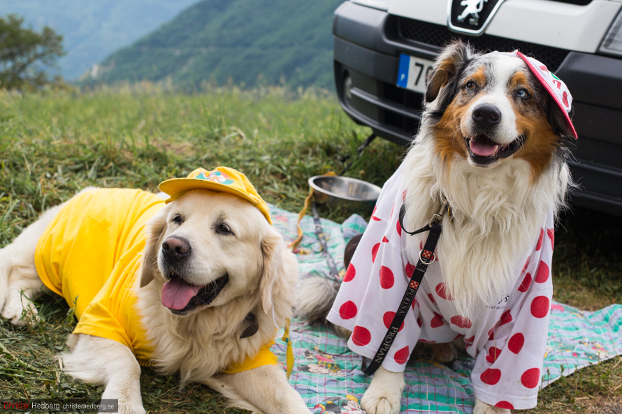 Tour de France '13: Cute dogs and Englishmen. Photo: Christer Hedberg | christerhedberg.se